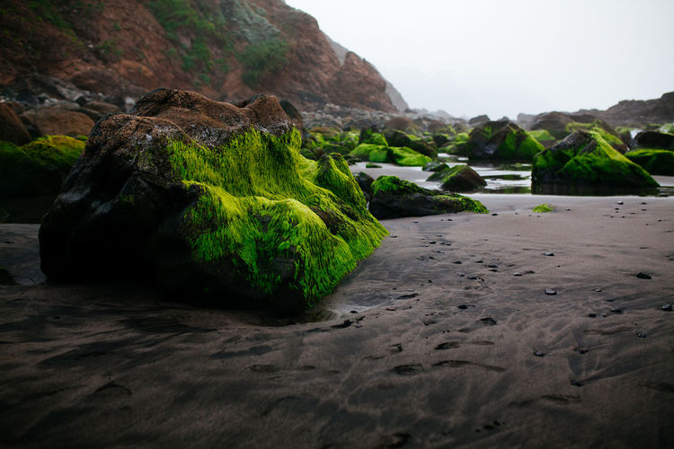 Benijo beach - Tenerife EyeEm Nature Lover Foggy Weather Oceanside SPAIN Beauty In Nature Blacksandbeach Green Color Land Moss Mountain Nature No People Outdoors Plant Rock Rock - Object Rock Formation Sand Scenics - Nature Sky Solid Tenerife Tranquil Scene Tranquility Water