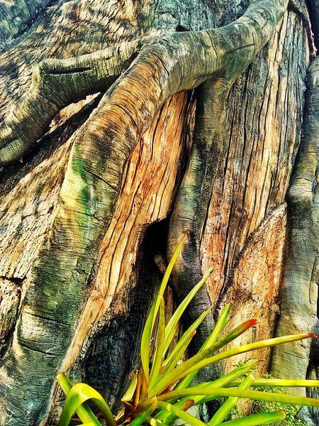 Root Roots Roots Of Tree Root Of A Tree Root Of The Tree Root Of Tree Textured  Texture Texture Photography Texture On The Tree Tree Texture