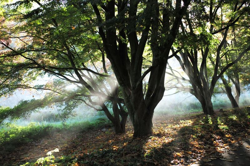 Baum im Morgennebel Tree Nature Sunlight Day Outdoors No People Leaf Landscape Beauty In Nature Autumn Forest Fog Rural Scene EyeEmNewHere