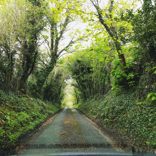 Day Green Color Outdoors Nature No People Tree Growth Grass Beauty In Nature Freshness Ireland Ireland🍀 Explore Travel Destinations Traveling Beauty Oxygen Roadtrip EyeEmNewHere The Great Outdoors - 2017 EyeEm Awards