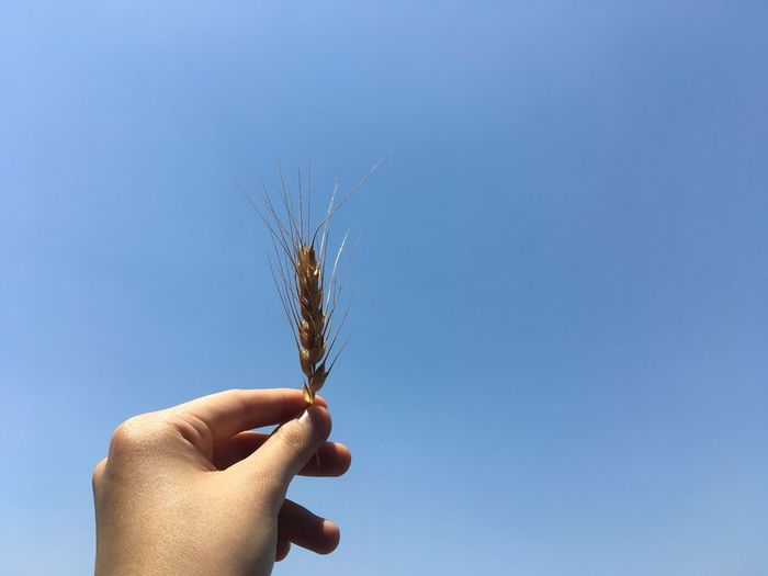 Cropped hand of person holding plant stem against sky