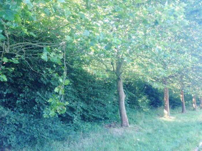 Beautifull trees in Belgium! Proudtobedutch
