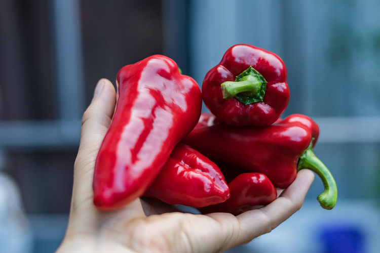 Cropped hand holding red bell peppers