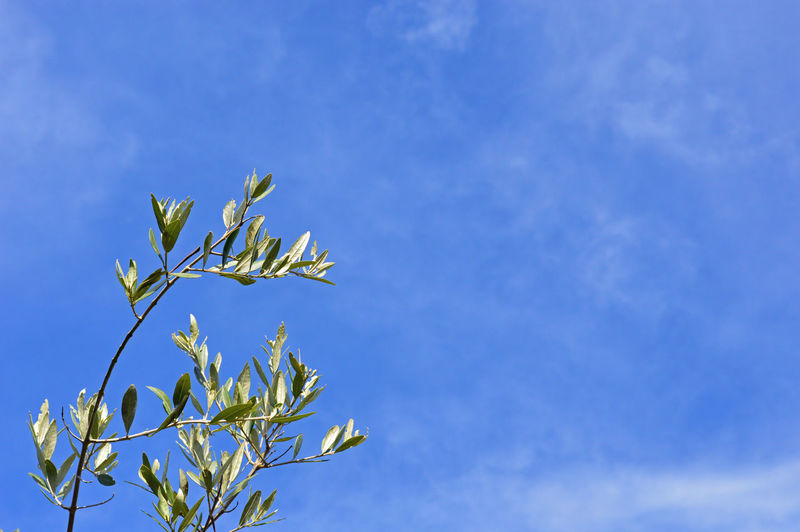 Beauty In Nature Blue Botany Branch Garden Garden Photography Laurel  Leaf Nature Outdoors Plant Plant Sky Tranquility