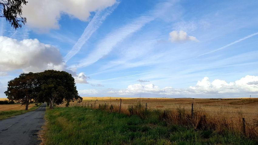 Agriculture Landscape Cloud - Sky Alentejo EyeEm Best Shots EyeEm Nature Lover Eye4photography