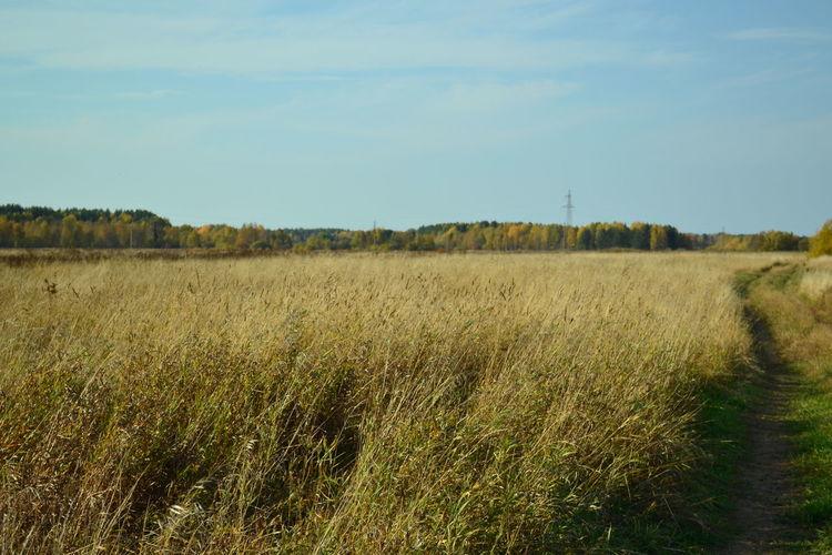 полерусскоеполе чистое небо Золотая осень осеннеенастроение