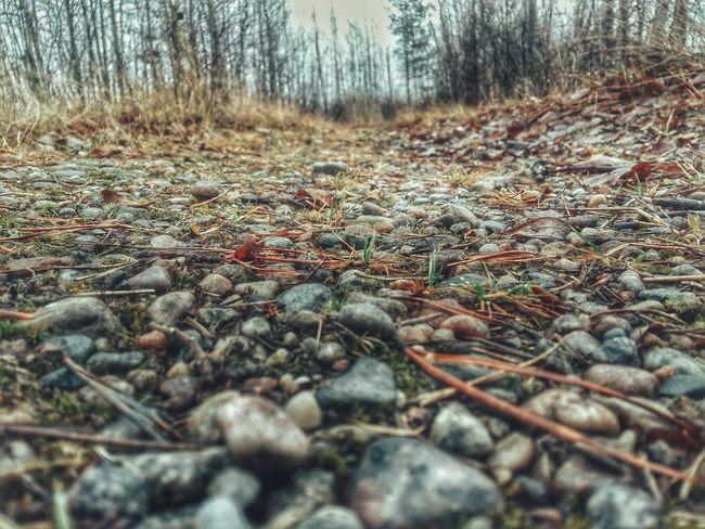 камушки дорожка осень