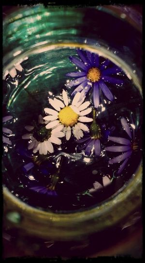 Daisies Bouquet In A Bottle Swirl Twist And Turns