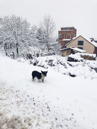 View of a dog on snow covered landscape