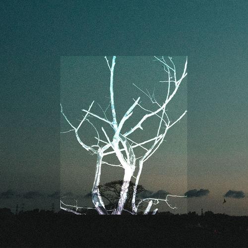 Bare tree against illuminated wall at night