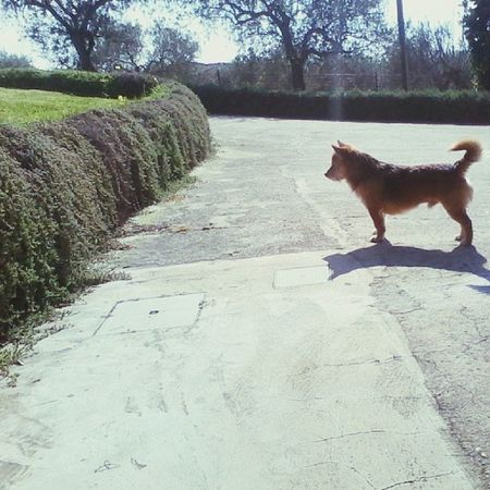 Searching something unknown... if you're a dog,you can understand it. ?? Crazydog Animal Dog
