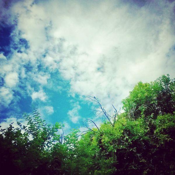 """""""Os céus proclamam a glória de Deus e o firmamento anuncia as obras de suas mãos"""" Salmos 19:1 ???????? Relaxing Hi! Check This Out Sky"""