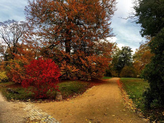 Herbstweg Herbst Herbststimmung Autumn Autumn Colors Potsdam Potsdam_city Park Parkbabelsberg Babelsberg