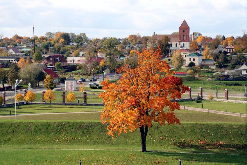 Autumn Colors Belarus Colors Autumn Beauty In Nature Leaf Outdoors Travel Destinations