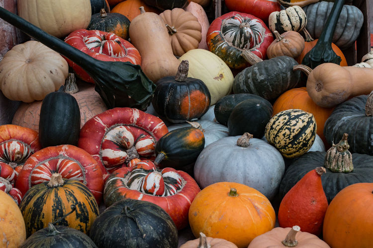 Close-up of squashes at tyntesfield