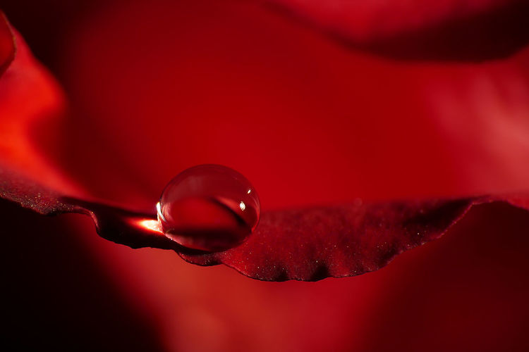 Close-up Drop Droplet Extreme Close Up Extreme Close-up Ideas Red Selective Focus Transparent Water Water Drop