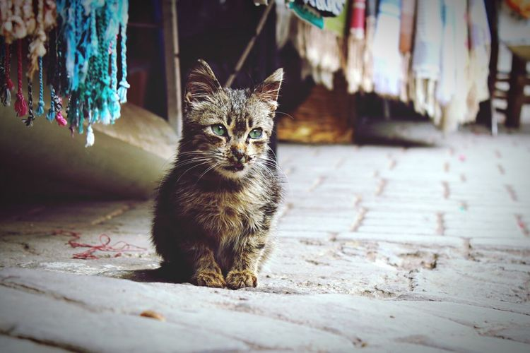 Close-up of stray kitten sitting on footpath in textile market