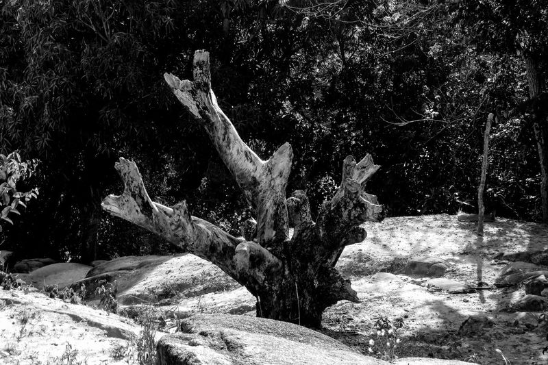 Tree trunk Beauty In Nature Black And White Blackandwhite BLCK&WHT Branch Day Growth Landscape Monochrome Photography Nature No People Non-urban Scene Outdoors Remote Root Scenics Solitude Tranquil Scene Tranquility Tree Tree Trunk