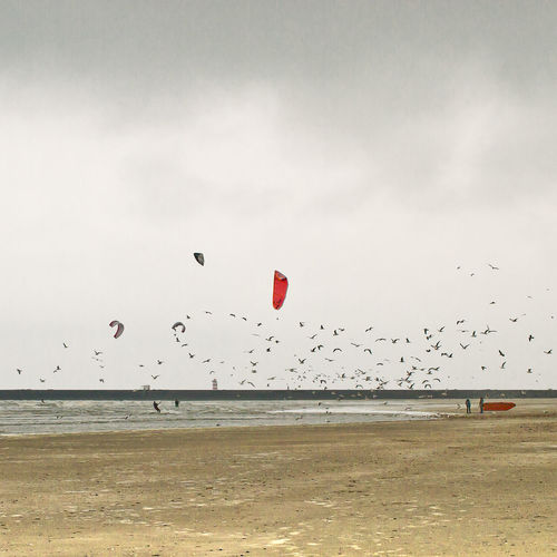 Flights Bird And Beach Bird And Beach Scape Birds And Wind Surfers Nature Water