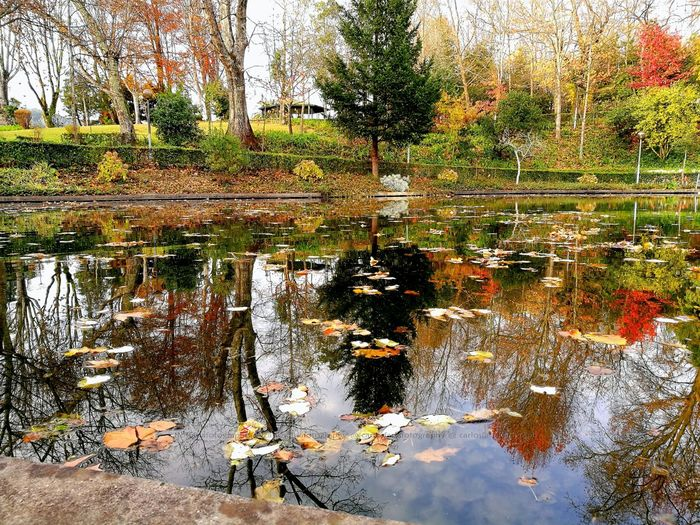 Reflection Water Nature Standing Water Parking Parque  Lake Tree Folhas Que Caem EyeEmNewHere