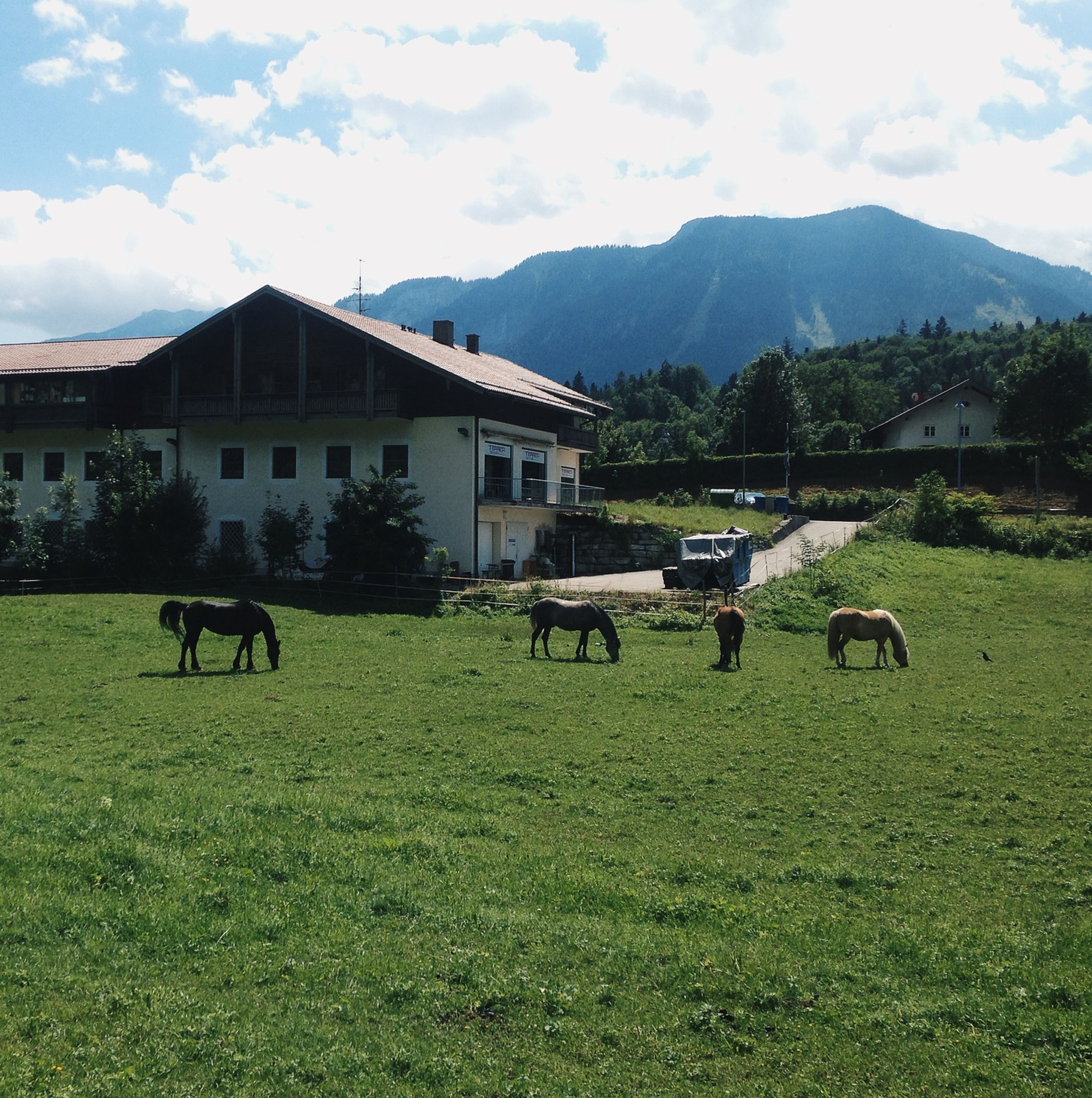 grass, sky, building exterior, animal themes, domestic animals, mountain, architecture, built structure, house, cloud - sky, livestock, field, green color, tree, cloud, landscape, horse, mountain range, grassy, mammal