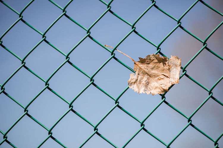 Dried leaf on chainlink fence against sky