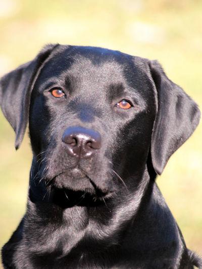 EyeEm Gallery EyeEm EyeEm Best Shots Dog Dog Pets Domestic Animals One Animal Animal Themes Mammal Black Color