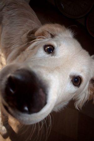 Dog Love Hello World Gunner