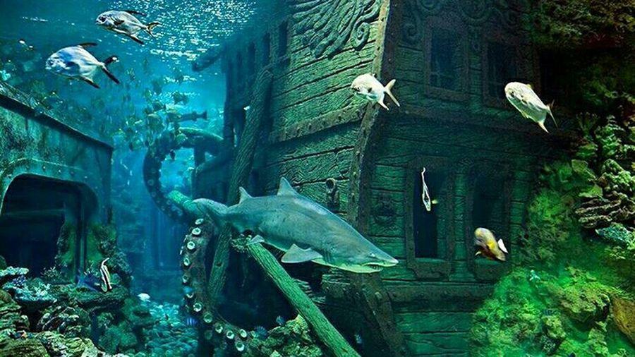 Океанариум в РИО океанариум Eye4photography  EyeEm Gallery EyeEm Best Shots Oceanarium Sea Fish Fish акула Archive