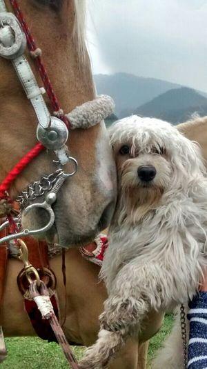 Mi Messi y el caballo. Beauty Ilovemydog Pets Dogs Lovefriends Friends ❤