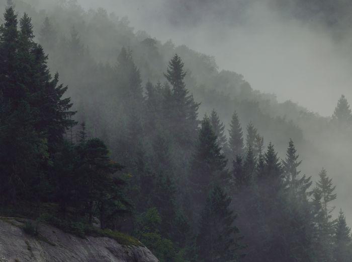 Fog Cold Temperature Environment Outdoors Hazy  Pine Tree Coniferous Tree Nature Tree Sky Mountain Foggy Mountain Telephoto Moody