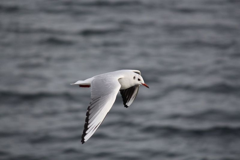 Martı Albatros Martı Kuslarin Dunyasi Deniz Gezi Doğa Hayvanlar