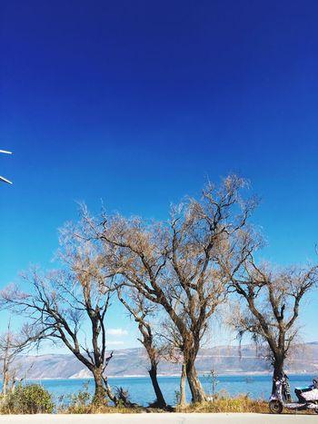 Trees Nice View Nice Day
