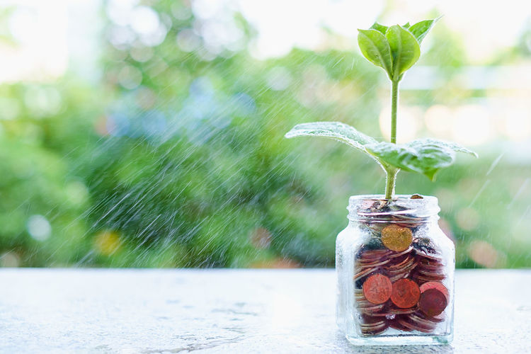 Business Currency Economy Spraying Bank Coin Container Ecology Environment Finance Focus On Foreground Freshness Glass - Material Growth Investment Jar Leaf Money Nature Plant Plant Part Savings Sustainable Water Wealth