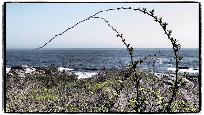 Seaside Landscape Ocean Maine