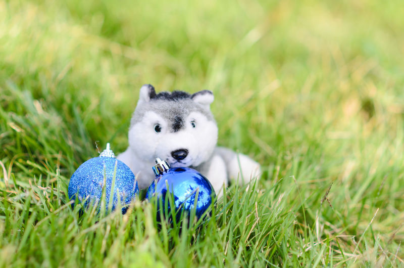 Toy Animal With Baubles On Field