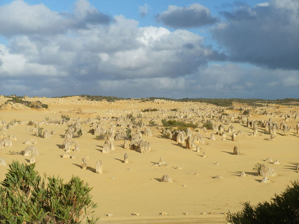 Landscape Sand Nature Cloud - Sky Scenics Desert Animal Wildlife Sky Outdoors Day Sand Dune No People Arid Climate Beauty In Nature Grass Animal Themes Mammal Pinnacles Australian Landscape Rock Formation Yellow Color Scenic Landscapes Parks Paint The Town Yellow