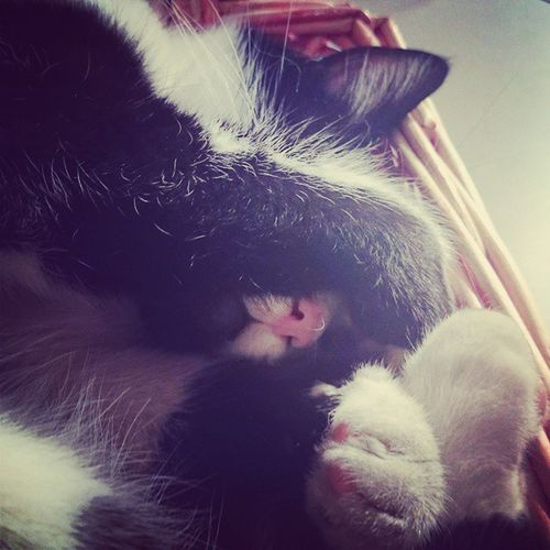 NoTheLightNoooo Cat Bnw CheBelNasinoRosa SleepAllDay