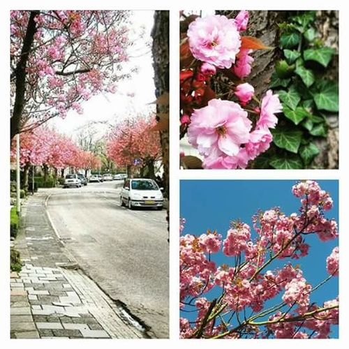 Past.sartonstraat Springtime Blossom Blossom Tree Blossom Flowers Streetphotography Valkenburg Taking Photos Collage The Week On Eyem Showcase July