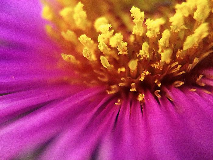 💛 💗 Flower