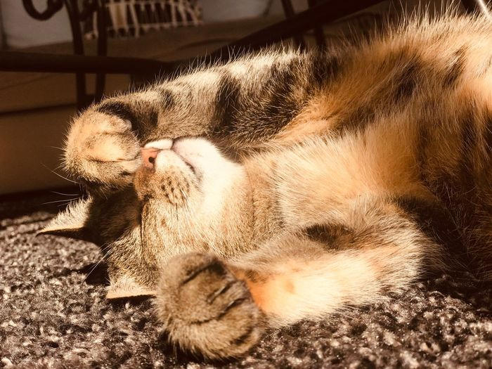 Animal Themes Animal Mammal Pets Domestic Animals One Animal Domestic Vertebrate Close-up Canine Feline Sunlight Domestic Cat Cat Relaxation No People Indoors  Resting Dog Sleeping