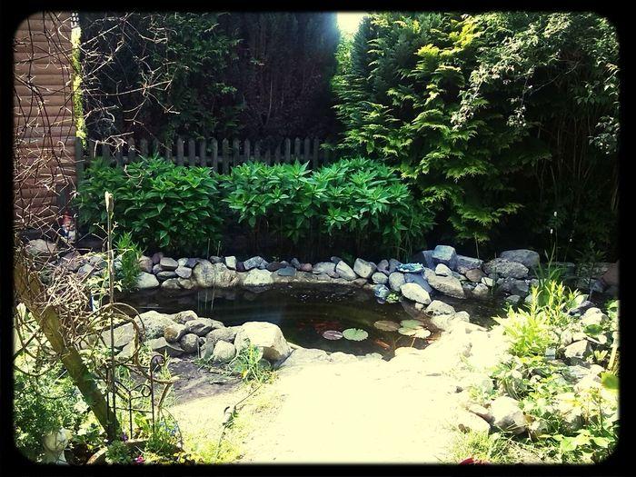 Hi leute hier ein Foto von unseren Teich ;) Taking Photos First Eyeem Photo