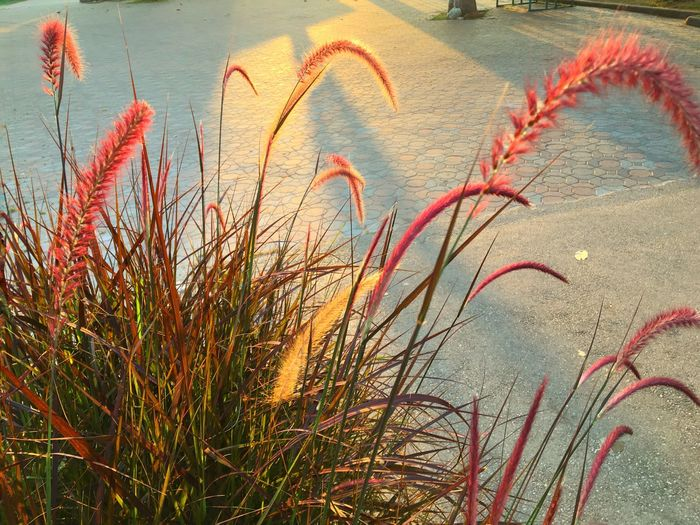 Close-up of grass by sea