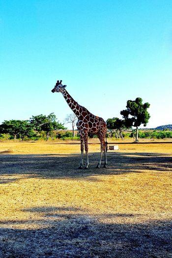 Animal Themes Safari Animals Wildlife One Animal Day Outdoors