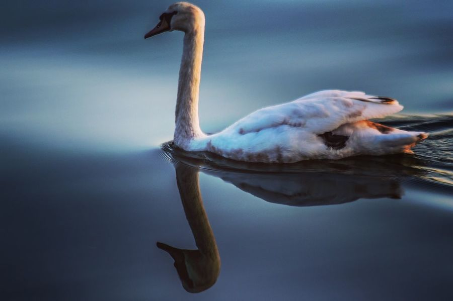 EyeEmNewHere Animal Themes One Animal Animals In The Wild Bird Animal Wildlife No People Nature Water Reflection Outdoors Day Lake Beauty In Nature Close-up Sky