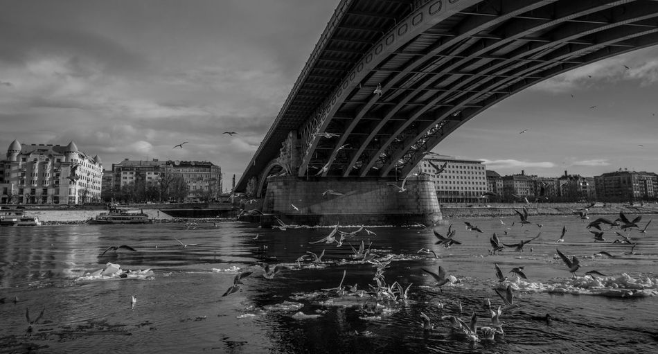 Architecture Bird Birds Bridge - Man Made Structure Building Exterior Built Structure City Connection Day Nature No People Outdoors River Sky Travel Destinations Water EyeEmNewHere