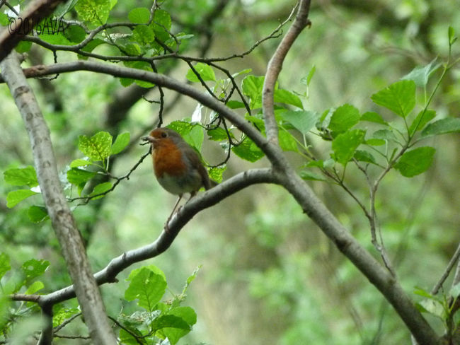 Singing Robin in the forest. Beauty In Nature Bird Cute Enjoying The Sun ☀ Forestwalk Outdoors Peaceful Perching Singing