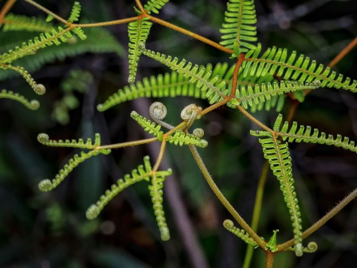 Close-up Green Color Full Frame Plant Nature Ferns Leaf Day Beauty In Nature Fragility Freshness Shadows & Lights EyeEm Gallery EyeEm Best Shots Artistic Expression Beauty In Nature A Moment Of Zen... Em Natural Lover Focus On Foreground Bokeh Bokeh Nature