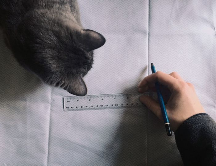 Cropped Image Of Tailor Marking On Fabric With Cat On Table