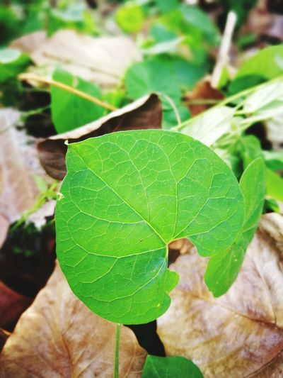 Leaf Green Color Close-up Growth Nature Plant Day Agriculture No People Focus On Foreground Outdoors Freshness Fragility Beauty In Nature